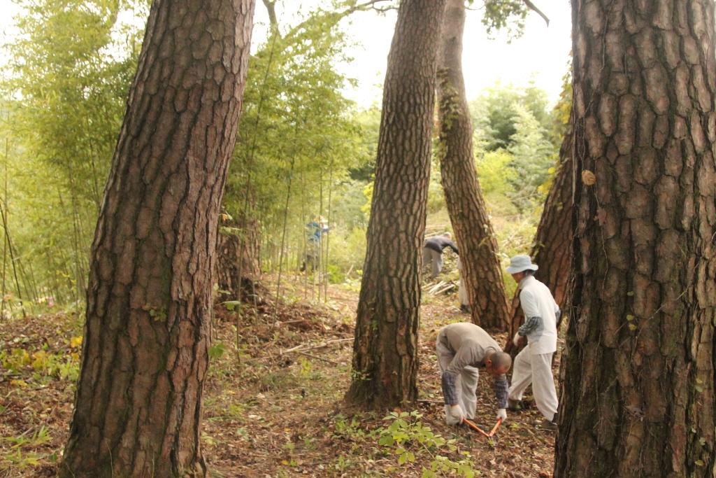 금당선원 수좌스님 - 대나무숲 가꾸기 울력