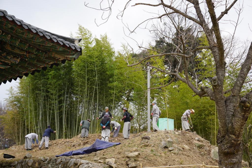 봄맞이 大운력 -- 매화, 대나무 식목 / 대숲 청소